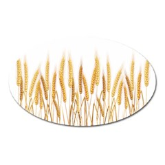 Wheat Plants Oval Magnet by Mariart