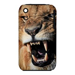 Male Lion Angry Iphone 3s/3gs by Celenk