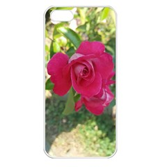 Romantic Red Rose Photography Apple Iphone 5 Seamless Case (white) by yoursparklingshop