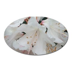 Floral Design White Flowers Photography Oval Magnet by yoursparklingshop