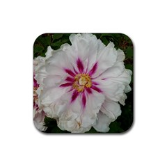 Floral Soft Pink Flower Photography Peony Rose Rubber Square Coaster (4 Pack)  by yoursparklingshop
