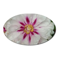 Floral Soft Pink Flower Photography Peony Rose Oval Magnet by yoursparklingshop