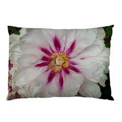 Floral Soft Pink Flower Photography Peony Rose Pillow Case (two Sides)