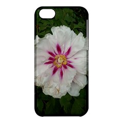 Floral Soft Pink Flower Photography Peony Rose Apple Iphone 5c Hardshell Case by yoursparklingshop