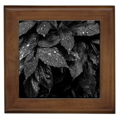 Black And White Leaves Photo Framed Tiles by dflcprintsclothing