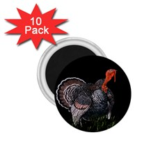 Thanksgiving Turkey 1 75  Magnets (10 Pack)  by Valentinaart