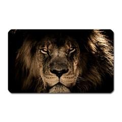 African Lion Mane Close Eyes Magnet (rectangular) by Celenk
