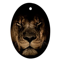 African Lion Mane Close Eyes Oval Ornament (two Sides) by Celenk