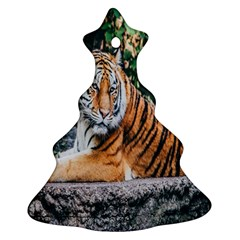 Animal Big Cat Safari Tiger Ornament (christmas Tree)  by Celenk