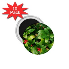 Christmas Season Floral Green Red Skimmia Flower 1 75  Magnets (10 Pack)  by yoursparklingshop
