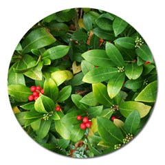 Christmas Season Floral Green Red Skimmia Flower Magnet 5  (round) by yoursparklingshop