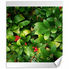 Christmas Season Floral Green Red Skimmia Flower Canvas 20  X 24   by yoursparklingshop