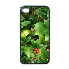 Christmas Season Floral Green Red Skimmia Flower Apple Iphone 4 Case (black) by yoursparklingshop