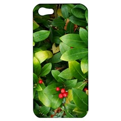 Christmas Season Floral Green Red Skimmia Flower Apple Iphone 5 Hardshell Case by yoursparklingshop