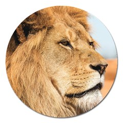 Big Male Lion Looking Right Magnet 5  (round) by Ucco