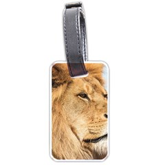 Big Male Lion Looking Right Luggage Tags (one Side)  by Ucco