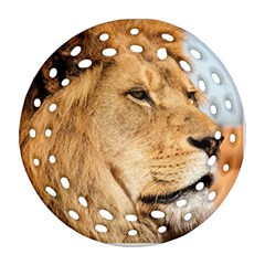 Big Male Lion Looking Right Ornament (round Filigree) by Ucco