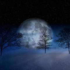 Winter Wintry Moon Christmas Snow Magic Photo Cubes by Celenk