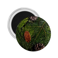 Branch Christmas Cone Evergreen 2 25  Magnets by Celenk