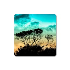 Trees Branches Branch Nature Square Magnet by Celenk