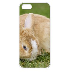 Beautiful Blue Eyed Bunny On Green Grass Apple Iphone 5 Seamless Case (white) by Ucco