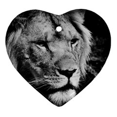 Africa Lion Male Closeup Macro Ornament (heart)