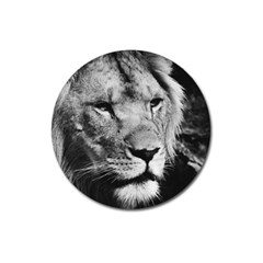 Africa Lion Male Closeup Macro Magnet 3  (round)