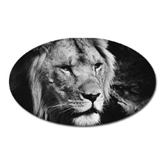 Africa Lion Male Closeup Macro Oval Magnet by BangZart