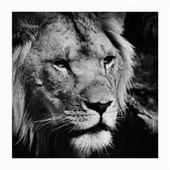 Africa Lion Male Closeup Macro Medium Glasses Cloth (2 Side) by BangZart