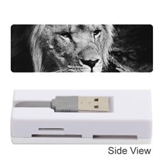 Africa Lion Male Closeup Macro Memory Card Reader (stick)