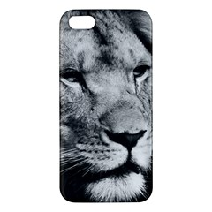 Africa Lion Male Closeup Macro Apple Iphone 5 Premium Hardshell Case