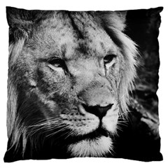 Africa Lion Male Closeup Macro Large Flano Cushion Case (one Side) by BangZart