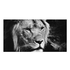 Africa Lion Male Closeup Macro Satin Shawl by BangZart