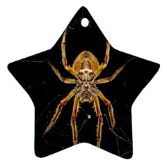 Insect Macro Spider Colombia Ornament (star) by BangZart