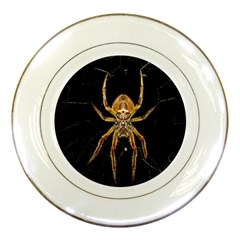 Insect Macro Spider Colombia Porcelain Plates