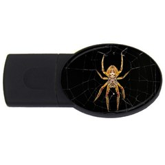 Insect Macro Spider Colombia Usb Flash Drive Oval (4 Gb)