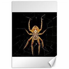 Insect Macro Spider Colombia Canvas 20  X 30   by BangZart