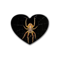 Insect Macro Spider Colombia Rubber Coaster (heart)