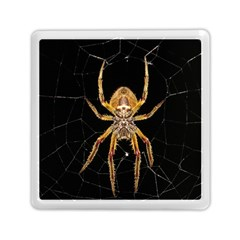 Insect Macro Spider Colombia Memory Card Reader (square)