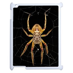Insect Macro Spider Colombia Apple Ipad 2 Case (white) by BangZart