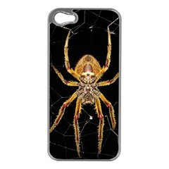 Insect Macro Spider Colombia Apple Iphone 5 Case (silver)