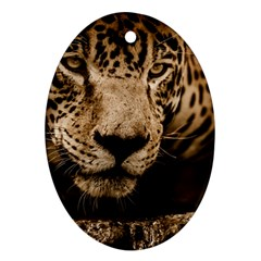 Jaguar Water Stalking Eyes Ornament (oval)
