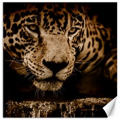 Jaguar Water Stalking Eyes Canvas 16  X 16