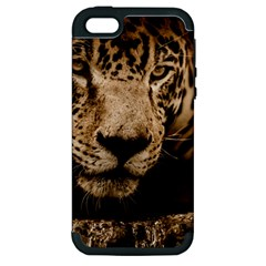 Jaguar Water Stalking Eyes Apple Iphone 5 Hardshell Case (pc+silicone)