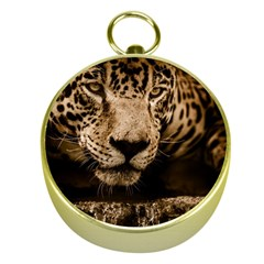 Jaguar Water Stalking Eyes Gold Compasses