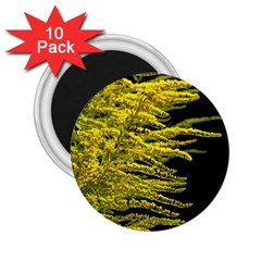 Golden Rod Gold Diamond 2 25  Magnets (10 Pack)  by BangZart