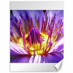 Flower Blossom Bloom Nature Canvas 36  X 48