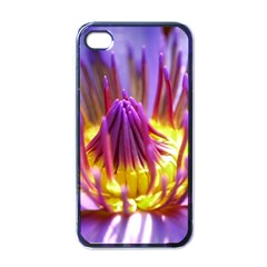 Flower Blossom Bloom Nature Apple Iphone 4 Case (black) by BangZart