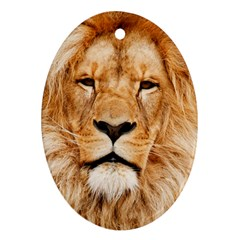 Africa African Animal Cat Close Up Oval Ornament (two Sides)