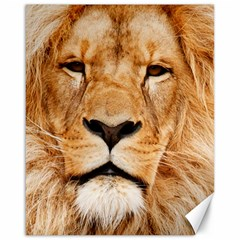 Africa African Animal Cat Close Up Canvas 16  X 20